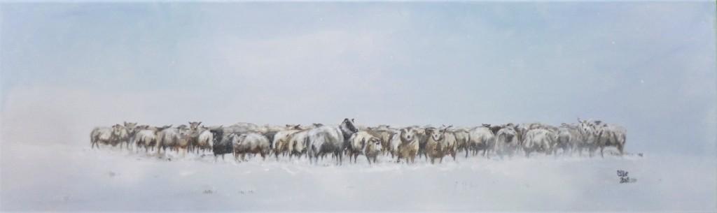 kl_2018-snowy-sheep
