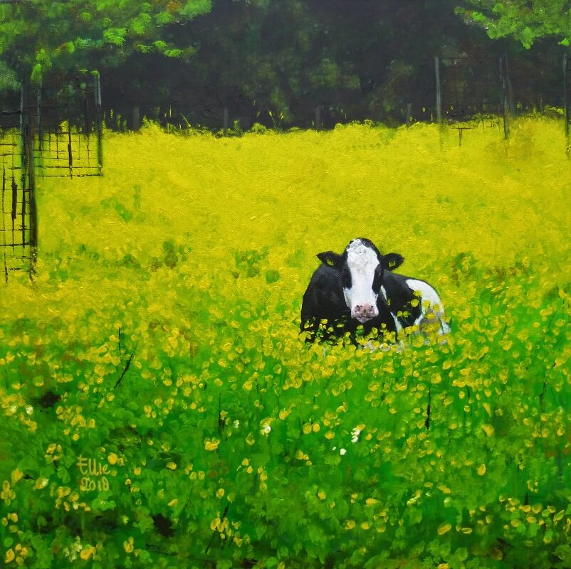 kl_2018 Buttercups cow